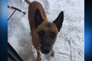 Police dog shot and killed in line of duty
