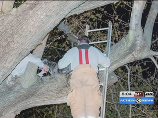 120-pound Great Dane gets stuck in tree
