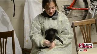 Students rescue dogs during hurricane aid trip