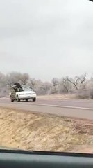 Video: Steer rides shotgun on a Nebraska highway