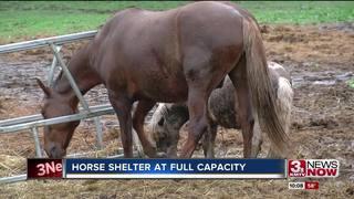 Horse shelter at capacity, facing hay price hike