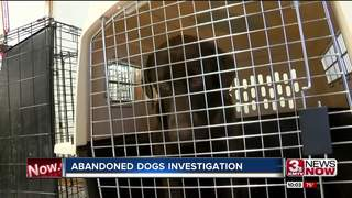 30 dogs found abandoned in western Iowa
