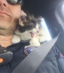 Family rescues kitten thrown from car on I-80