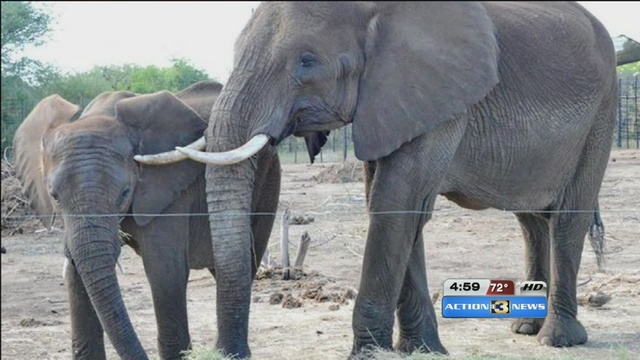 6 elephants arriving at Henry Doorly Zoo & 6 elephants arriving at Henry Doorly Zoo - KMTV.com