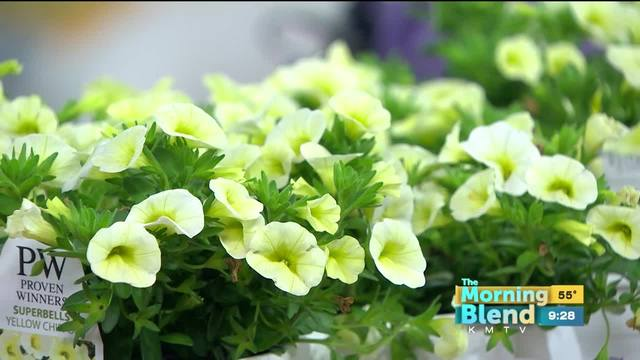 Canoyer Garden Center 5/23/17 - KMTV.com