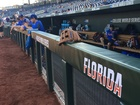 Florida vs. Texas Tech live updates