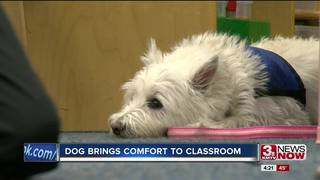Papio pooch adds comfort to the classroom