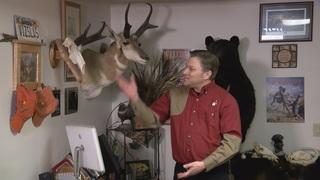 Hunter: Saving eagles worth using non-lead ammo