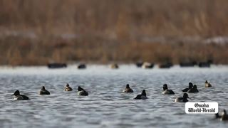 Marsh Madness in full swing at Ponca State Park
