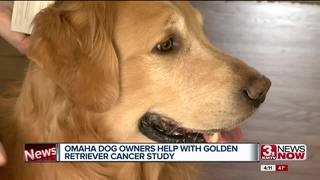 Omaha dog owners help with study