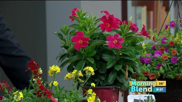 Canoyer Garden Center 4/19/18 - KMTV.com