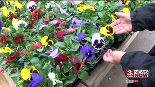 Weather delaying spring flowers
