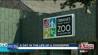 Zookeeping for 41 years at the Henry Doorly Zoo