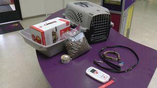 Pet preparedness in disasters